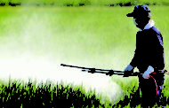 Impact of Pesticides in Increasing the Risk of Parkinson's Disorder